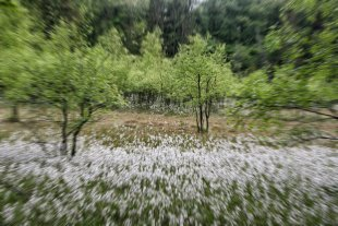 Kleine Waldlichtung 2 .jpg von Didjeh