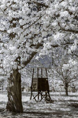 Kirschblütenwelt von Thomas-Weinsheimer
