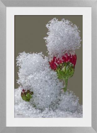 Im Schnee von HarryRS