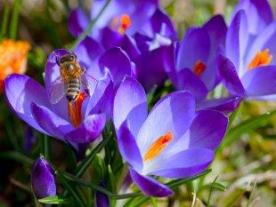 Frühlingsfarben II von mko800