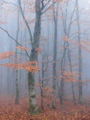 Herbst von FelixW80