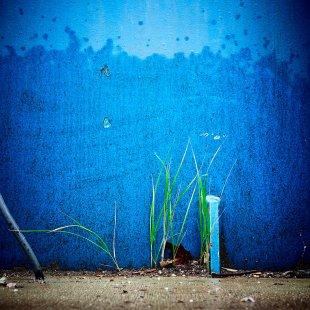 Blau und Grün von Tom Icke