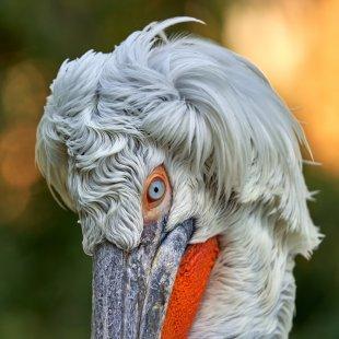 Frisur? Natur! von analoochjehtooch