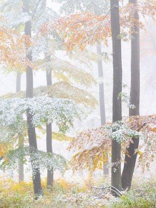 Herbstschneenebelbuchenwald von FelixW80