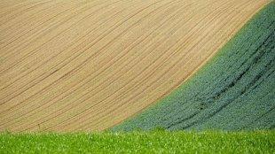 Grünstreifen von Joachim Kiner
