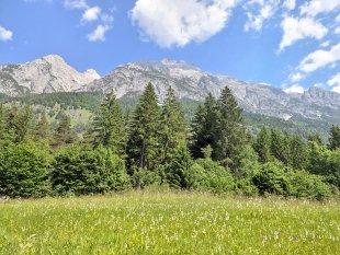 Wiese, Bäumchen, Berge von Jademax