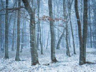 Schneefall im Eichenwald von FelixW80