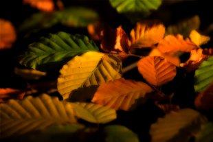 Herbstschmuck von Nenali