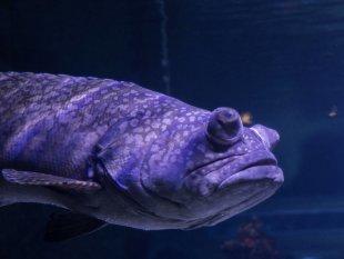 Glupschfisch von Serky