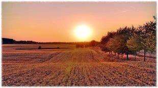 Sunset Allee von Tele-Thommel