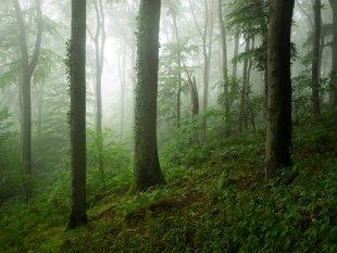 Nebel im Siebengebirge von FelixW80