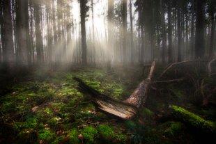 Der Frühling erwacht in Mecklenburgs Wäldern von pocki87