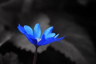 Blue one von tlufotos