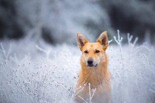 Smillas Gespür für Schnee von m.go
