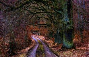 Mein Lieblings Waldweg.. von windus