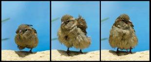 Verwandlungskünstler (GI - Triptychon) von WSCU-Foto