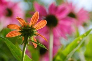Kleine Blüte ganz groß. von ASanderPhotography