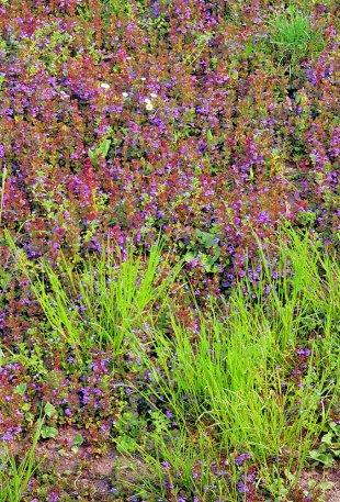 Frühlingswiese von Jademax