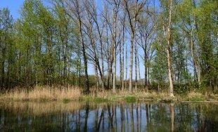 Frühling an der Donau von oitamooo