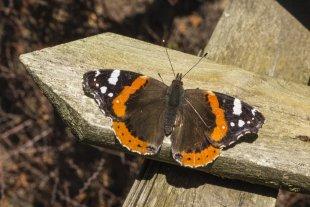Schmetterling im Februar II von JensonR