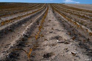 die Braune Saat ist aufgegangen von dg9ncc