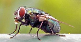 Fliege von Erhard Bartels