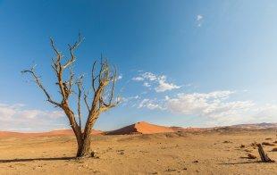 In der Namib von lewski