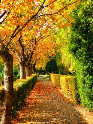 Herbstfarben von Schorsch1953