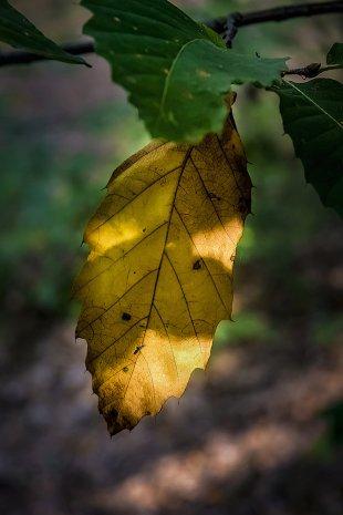 Herbstlicht von Addi Beck