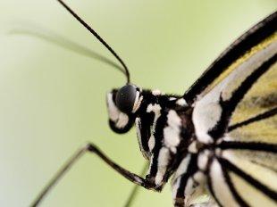 Schmetterling von Johannes Leckebusch