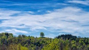 Landschaft mit Baum von 35mm