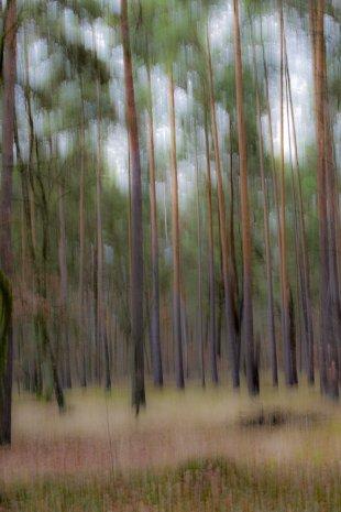 Zauberwald von JensonR