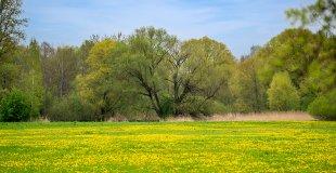 Frühlingswiese von 35mm