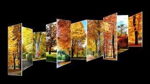 Herbstcollage von Didjeh