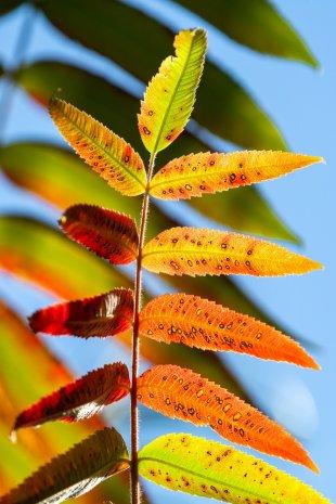 Herbstfarben 2 von Paul S.