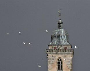 Pickelhaube mit Tauben von Martin Ruopp