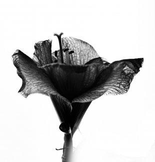 Gute Nacht Blume von Bernd Unger