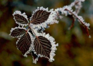 Schneekristalle 2.jpg von Didjeh