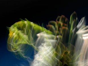 drachenfliegen von baumfrosch