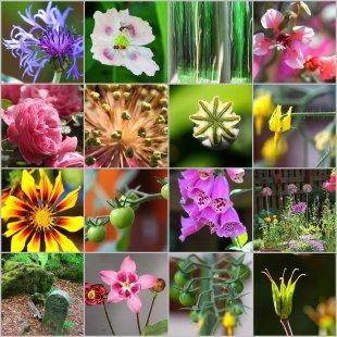 Garten-Impressionen Juni 2020 von Deisterfahrer