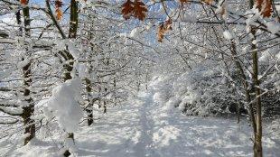 Sie nannten es Winter , Zauberwald von MyEye