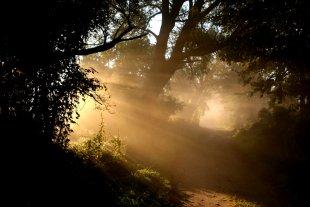 Nebelweg von Heike Maier