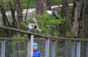 Die Tauben und das Kind von Alberts-Fotografie