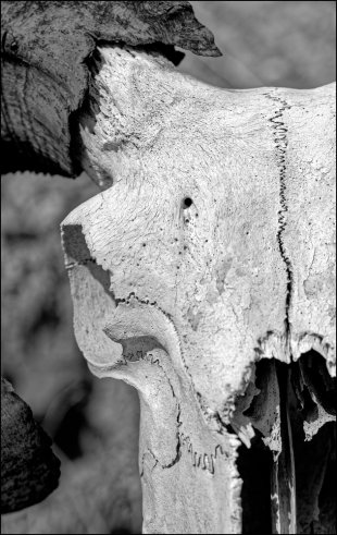 Skull von ispin