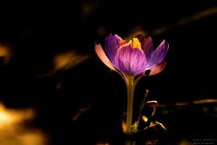 Spring awakening von Antubiss