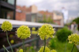 Blumen im High Line Park von Jürgen Merkel