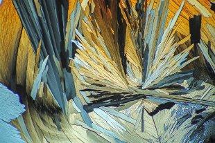 Bernsteinsäure, im polarisierten Licht 120:1 B11 von Microphot