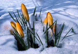 Frühlingsboten.jpg von Didjeh