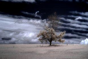 Last Tree Standing von Micro P. Nuts