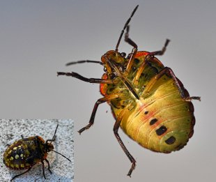 Käfer unter Glas von WolfSta56